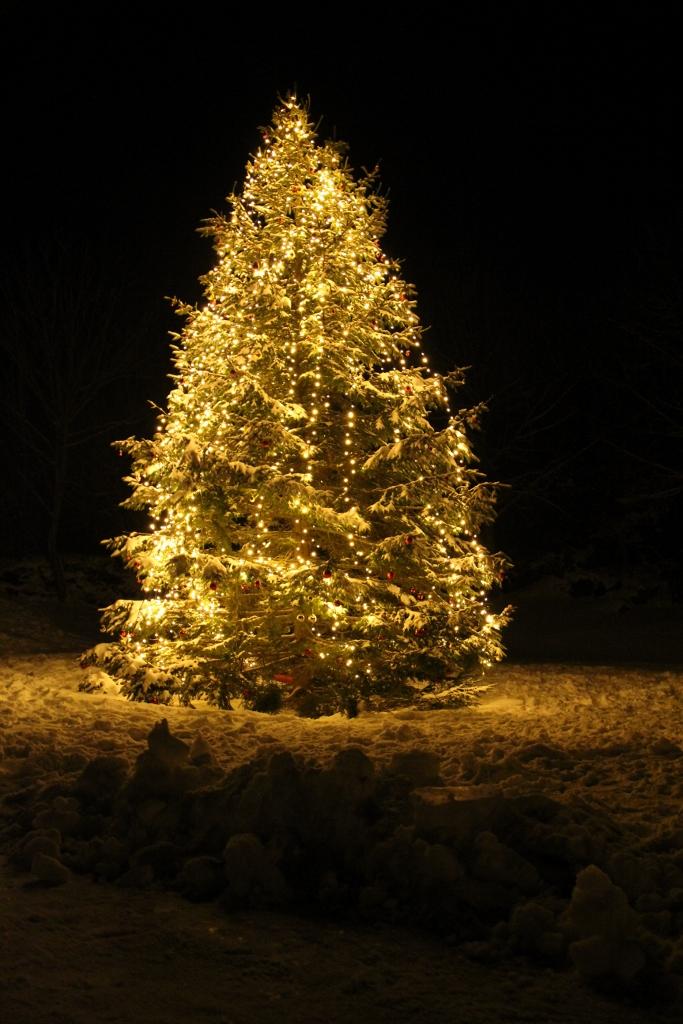 Tenning av juletre i Mostraparken desember 2013