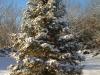 Juletreet er pynta og klart til tenning